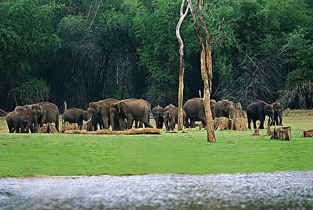 Elephants at Periyar lake by Exodus Travels , via Flickr