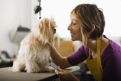 Every once in a while, your dog may find himself in a bit of a pickle with fur that needs a little assistance with becoming untangled. You can whip up your own detangling spray that will save the day. Regular brushing is also important to help keep the tangles away.