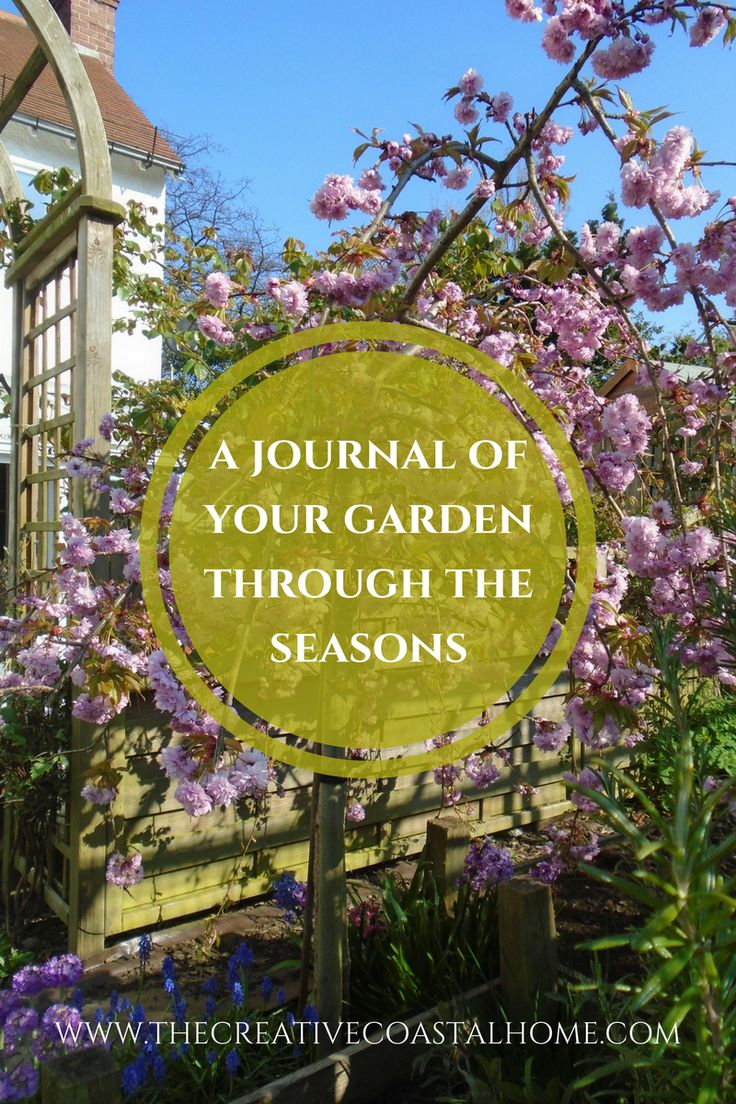 Keep a photo record of your garden to help improve your gardening skills