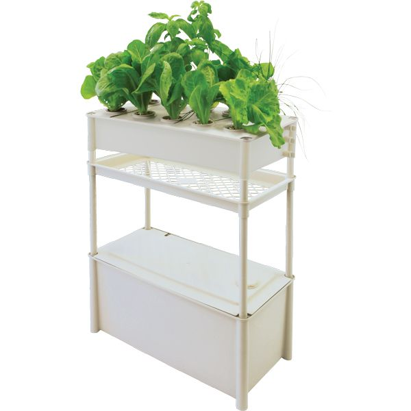 The Green Garden Shop - Moss Healthy Green - Salad Green Grower with Tank and Stand