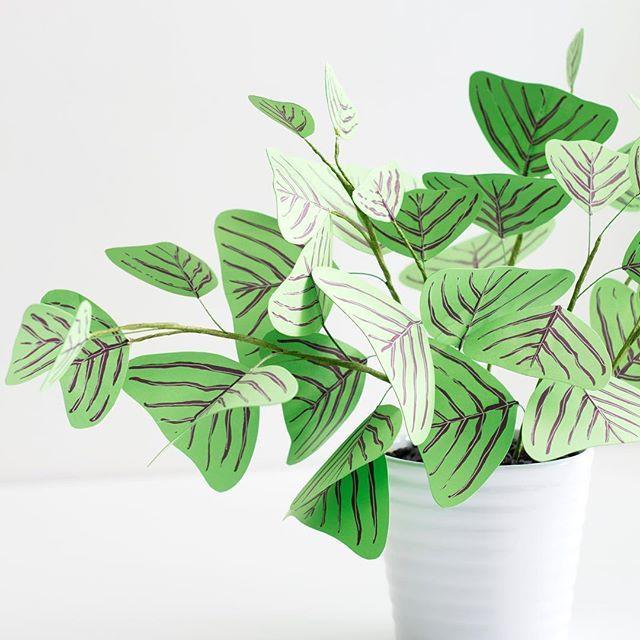 Paper Chinese language Cash Plant DIY