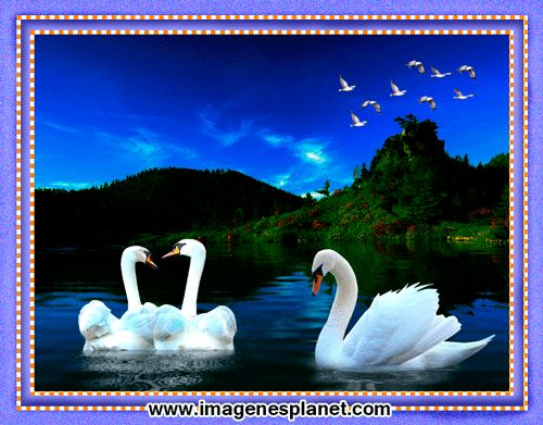 Buenas noches dulces sueños hasta mañana imagenes bonitas - Imagenes Romanticas para facebook | Imagenes de Amor