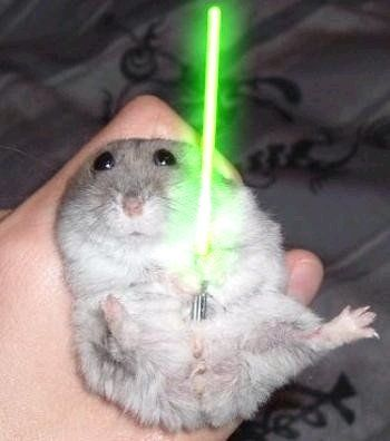 May the 4th be with you!  #fatgerbil  #starwars