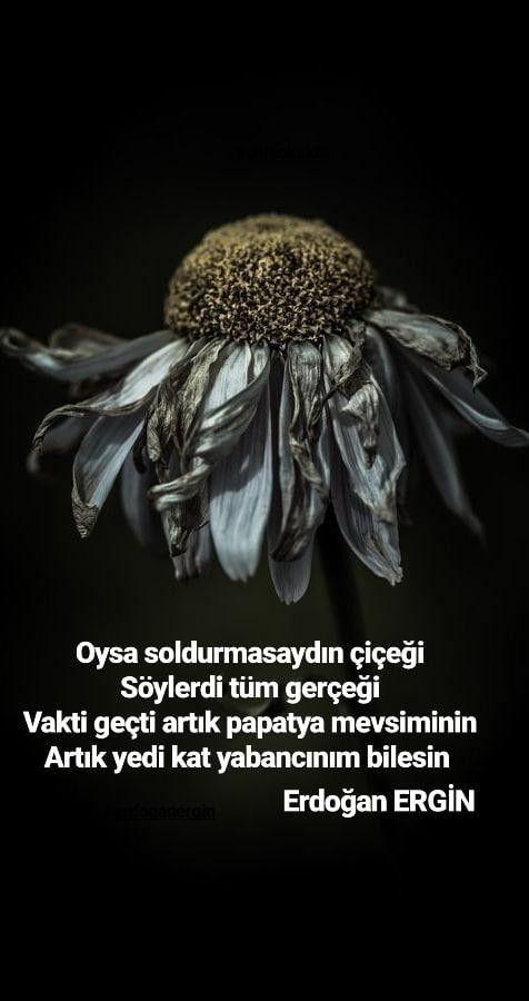 Şiir papatya Erdoğan ERGİN#alıntı #aşk #sevgi #sevgili #şiiredair #şairveşiir #edebiyat #şiirsokakta #anlamlisözler #şiir #şairulkesi #şairveşiir #şiiredair #sözler #erdoğanergin #erdoganergin instagram.com/erdoganergin #love #poetry @erdoganergin