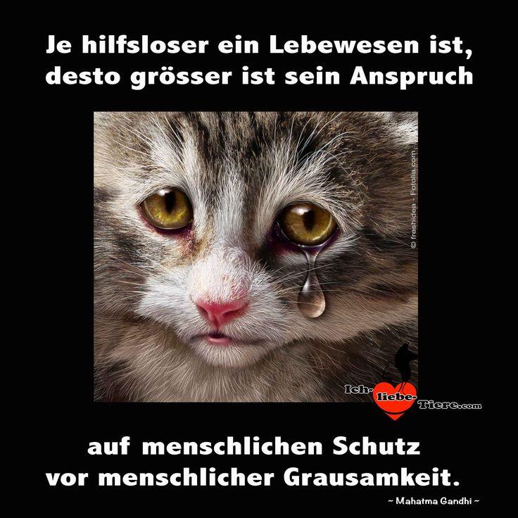 Je hilfloser ein Lebewesen ist, desto größer ist sein Anspruch auf menschlichen Schutz vor menschlicher Grausamkeit. >> http://www.ich-liebe-tiere.com/ <<