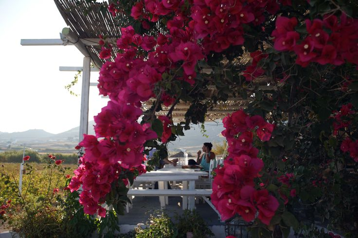 If you are looking for a relaxing place to sip local, organic wine Mykonos Vioma is the place to be. http://www.mykonosvioma.gr/visit-us.html