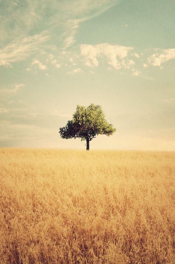 Lone tree in field. Photography by  Adrian Limani. #fields #tree #lonely
