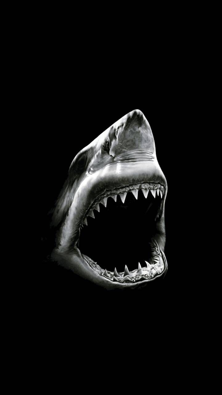 Download 9000 Wallpaper Black Shark Full Hd  Terbaik