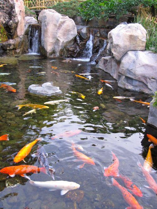 119 best images about the beauty of fish ponds on for Nishinomiya tsutakawa japanese garden koi