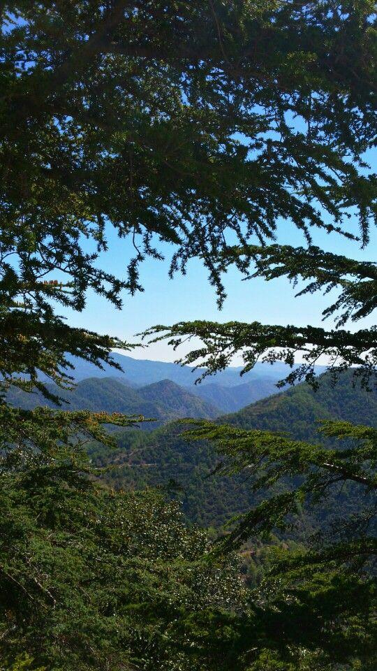 Troodos mountains <3 - Copyright Anna Christoforou
