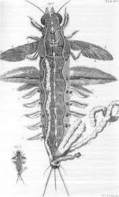 Boeck der Natuere dat was een boek van opvattingen van de wetenschappers. Er waren 2 boeken: de bijbel en boeck der nature. Als het antwoord niet in de bijbel stond, stond het in het boek: Boeck der Natuere.