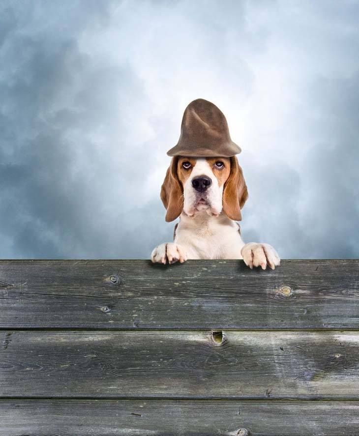 Here's a few cute Beagle dog names for this curious pup...Sherlock, Nosey, Hunter, Tracker