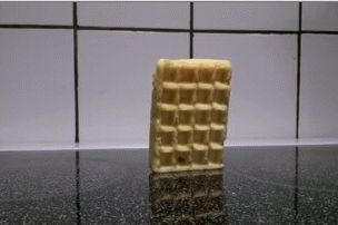 Waffle Falling Over – Gifs