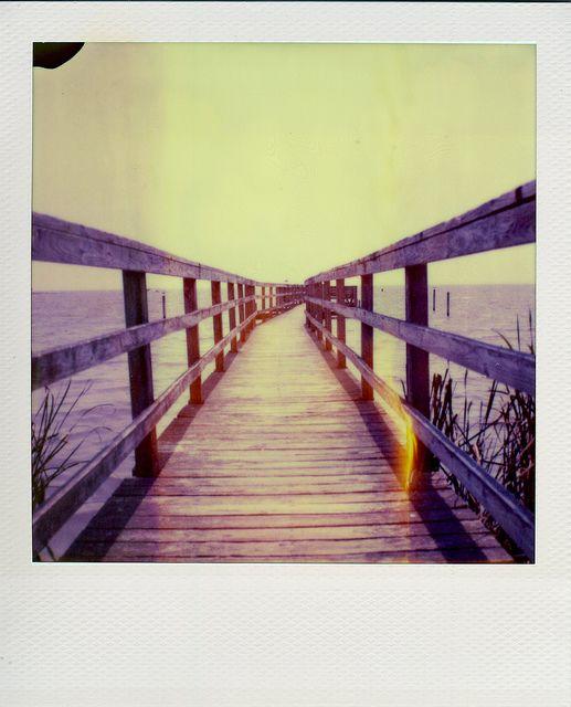 bridge / polaroid