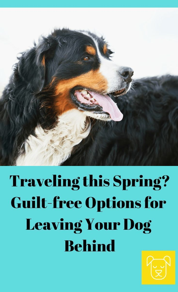 Vacationing This Spring Without Your Dog Now Worries Click