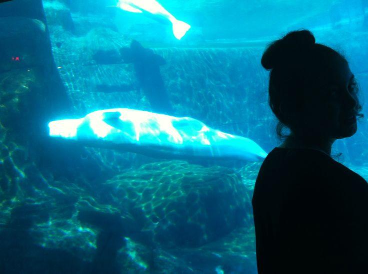 Vancouver Aquarium - Beluga whale enclosure