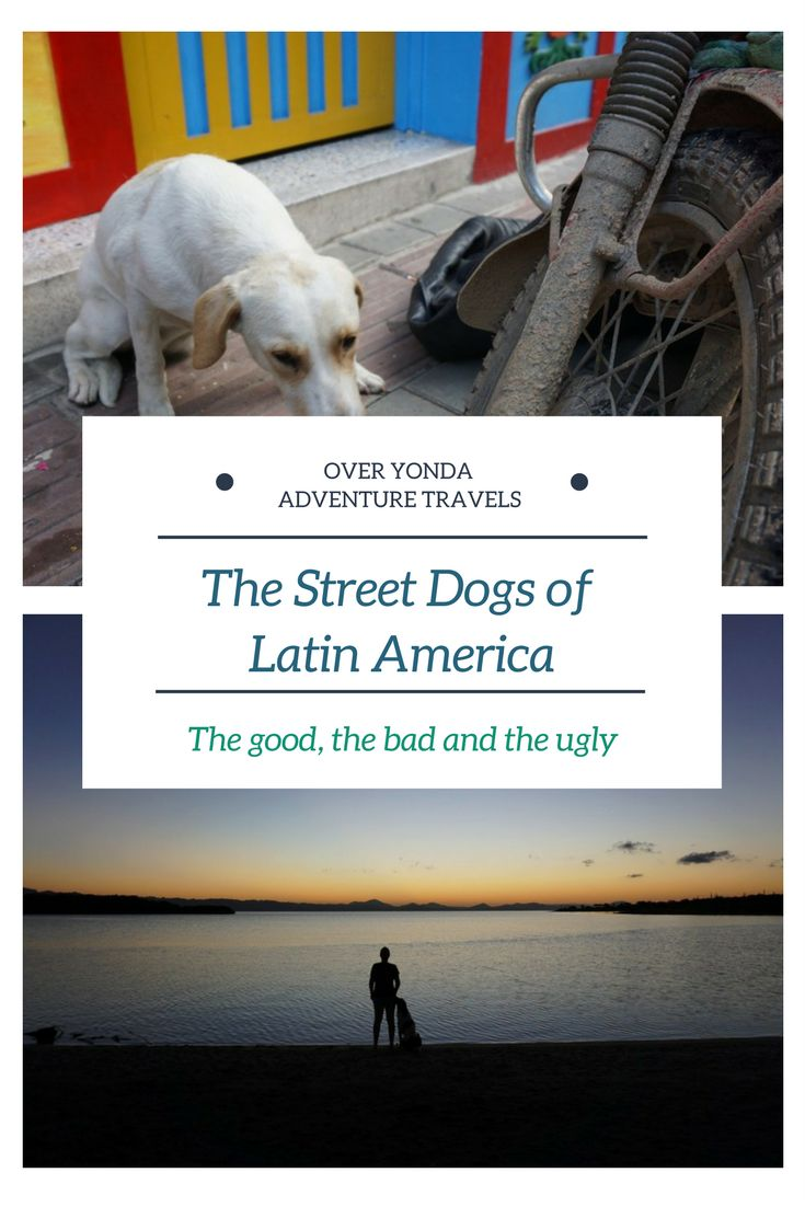 Its all about the #street #dogs of #Latin #America and how they won us over each and every time.