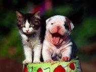 Papel de Parede Filhotinhos de gato e cachorro