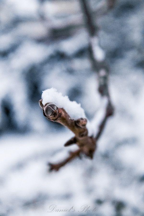 Frost by Nagy Daniel on 500px