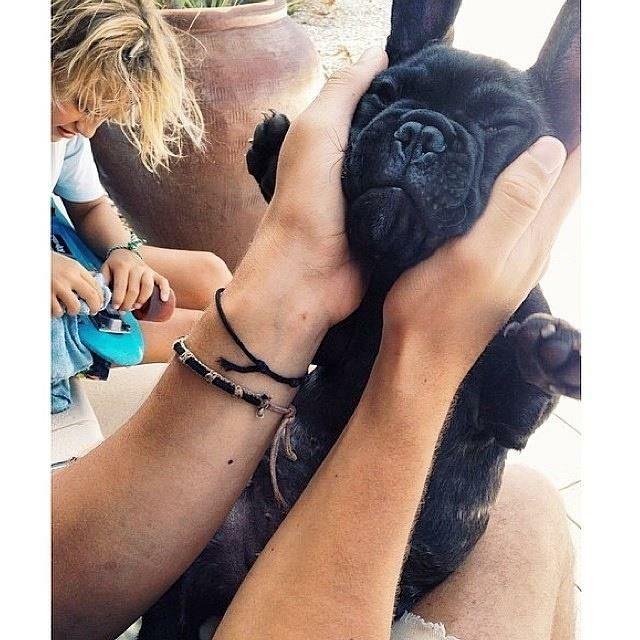 'Smoosh Face', French Bulldog Puppy