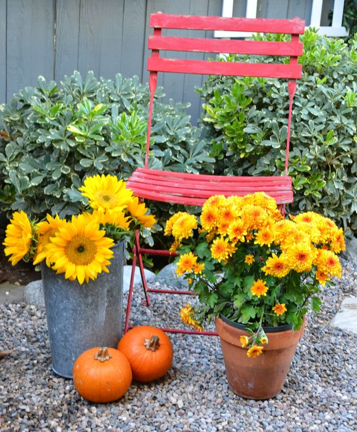 93 best images about fall in my garden on pinterest Flower painted pumpkins