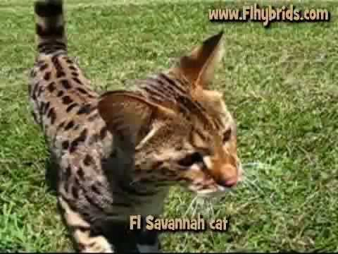 savannah asian personals Xvideoscom - the best free porn videos on internet, 100% free.