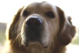 Dog Tick Fever Natural Treatment That Works