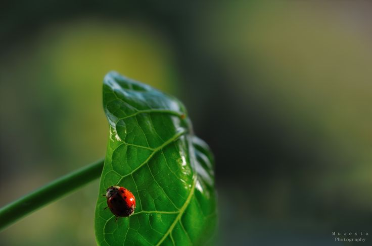 Ladybug in the sun