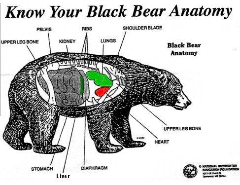 Black Bear Hunting Shot Placement
