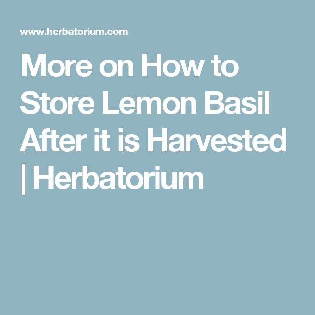 More on How to Store Lemon Basil After it is Harvested | Herbatorium