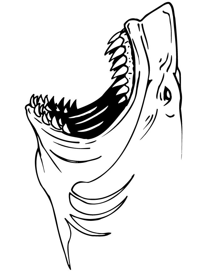 sharks coloring pages 670867 free printable coloring pagescoloring book
