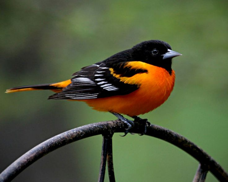 nature space pinterest baltimore orioles baltimore and maryland