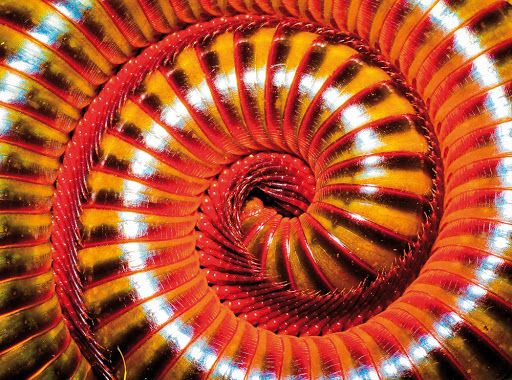 ナショジオ トピックス 自然の造形はなぜこんなに美しいのか――『自然がつくる不思議なパターン』著者が語る