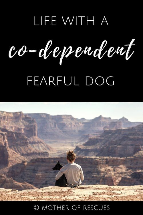 Life with a Co-Dependent Fearful Reactive Dog reactive dogs | shelter dogs | adopted dogs | fearful dogs | life | dog mom