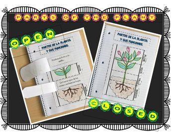 ***FREE***Parts of the plant and their jobs interactive journal sheet. Hoja para diario interactivo (interactive journal) de ciencias sobre las partes de la planta y su funcion.