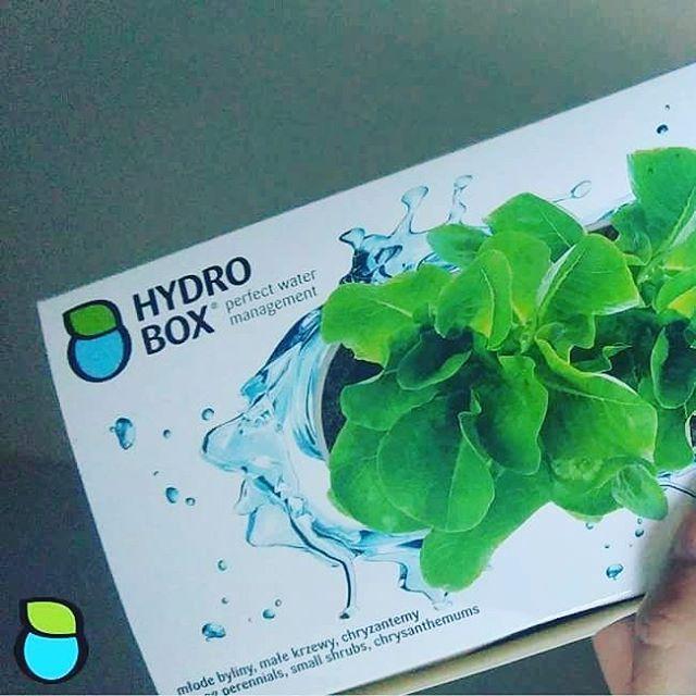 Hydrobox 2L- idealny pod niewielkie byliny, warzywa i owoce. #hydrobox #hydroboxpl #kwiaty #byliny #owoce #warzywa #hodowanie #ogrod #inspiracje #nawadnianie #watering #planting