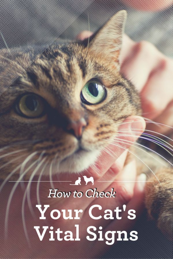 How to Check Your Cat's Vital Signs.Kristen Levine Pet Living