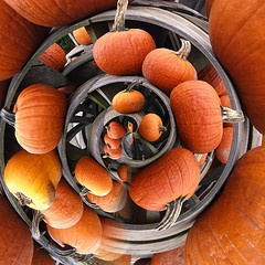 Spiraling pumpkins created using Tiny Planet Apps