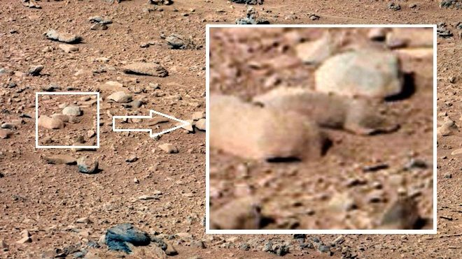 "05/29/13 Mars rat spied by NASA's Curiosity rover ~ A photo from the mast camera on NASA's Curiosity rover reveals the dusty orange, rock-strewn surface of the Red Planet -- and what starry-eyed enthusiasts claim is a dusty orange rodent hiding among the stones. The photo, taken Sept. 28, 2012, depicts the ""Rocknest"" site.. This article is a little sarcastic, poking fun at anyone who thinks there might be rodents on Mars. In my opinion, that looks a lot like a rat! See lizard in the smaller…"