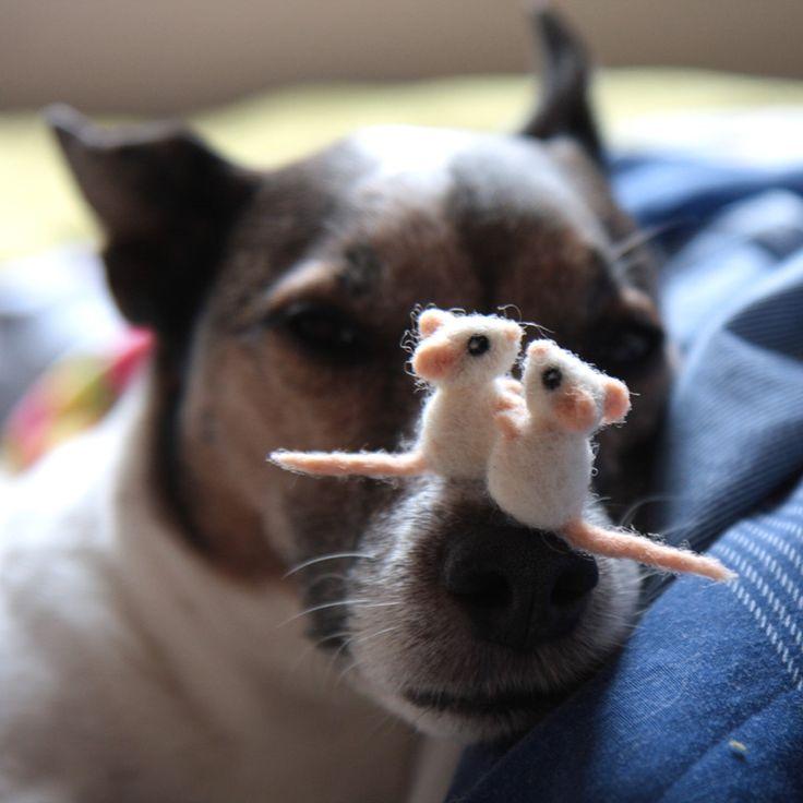 Ich will ja nicht behaupten, dass Mäuse zu haben glücklich macht, aber es erleichtert das Leben ungemein. Beispielsweise kümmern sie sich um die Zeitumstellung (nicht immer so, wie man sich das vor…