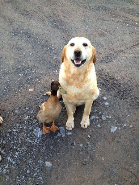 Cua cua, dijo el pato.  Guau, guau, le contesto el perro.   Y se hicieron amigos.
