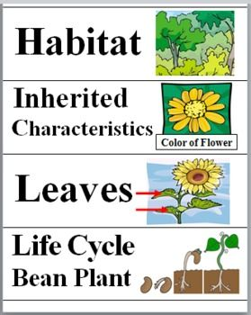 40 PLANT WORD WALL CARDS  The science words and vocabulary terms have a colorful corresponding picture on each card.