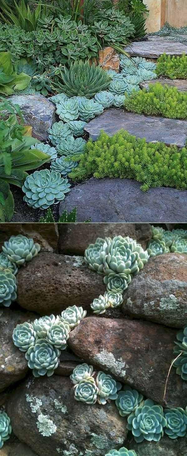 20 Ideas for Creating Amazing Garden Succulent