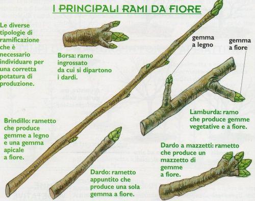 http://1.bp.blogspot.com/-Ut_BHgFsrPo/UYyq81qyB4I/AAAAAAAAZug/Vxk7no5KpDw/s1600/potatura_rami_da_fiore.JPG
