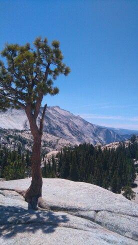 Yosemity park, Californie