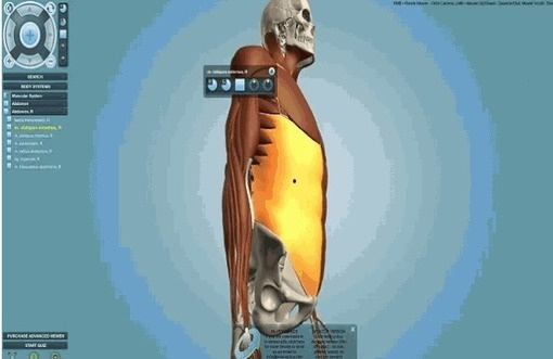 Juegos y animaciones online relacionadas con la medicina