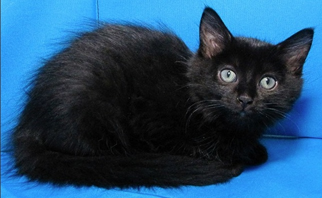 1000 Images About Cats Dogs Il Sangamon County Animal Control On Pinterest Cats Adoption
