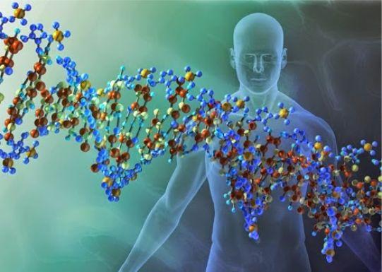 Μία ιδέα: Το γονίδιο της χειμερίας νάρκης στον άνθρωπο.