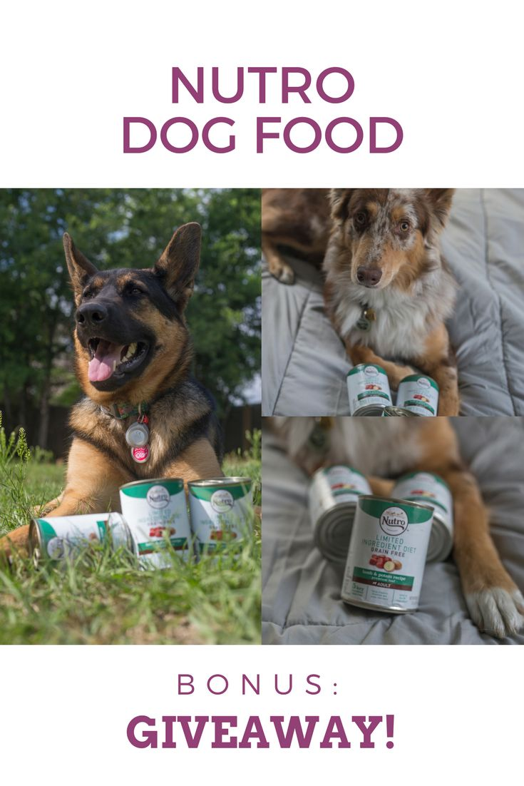 Are you looking for a better and higher quality of food for your dog? You should try Nutro dog food. Check out the reasons why   there's a giveaway!
