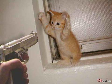 Roliga djur. Roliga Katter - YouTube